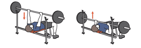 Alternatives à l'exercice du développé couché (Bench Press)